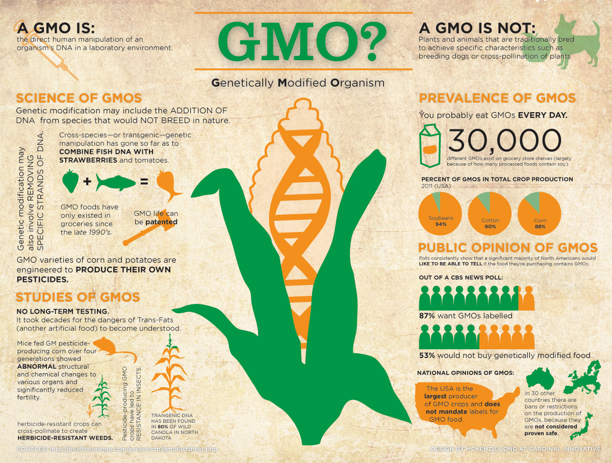 the many positive aspects of the genetically modified organisms A genetically modified organism (gmo) is any organism whose genetic material has been altered using genetic engineering techniques (ie, a genetically engineered organism) ) gmos are used to produce many medications and genetically modified foods and are widely used in scientific research and the production of other go.